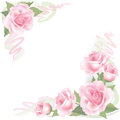 Flower rose frame on white background floral decor with pink roses Royalty Free Stock Photos
