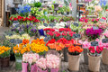 Flower for sale at a Dutch flower market, Amsterdam, Netherlands Royalty Free Stock Photo