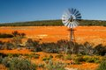 Flower scene winmill and spring flowers in skilpad reserve namaqualand Royalty Free Stock Photo