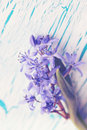 Flower scilla on the board vintage spring blue snowdrop Stock Photo