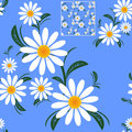 Flower seamless Pattern with Camomiles on blue. Royalty Free Stock Photo