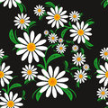 Flower seamless pattern with chamomiles on a black background picture is presented Stock Photography