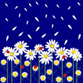 Flower seamless pattern with daisies Royalty Free Stock Photo