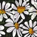 Flower seamless pattern. Field herbs daisy textile print decoration on vintage dark black background. Fashion traditional
