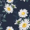 Flower seamless pattern. Field herbs daisy textile print decoration on vintage dark blue background.