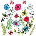 Flower set drawn by hand.Isolated flowers.Liliya, cornflower, chamomile, poppy, cotton, green branches