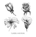 Flower set highly detailed hand drawn vector eps Royalty Free Stock Photo