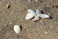 Flower And Shell In The Sand O...