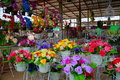 Flower shop artificial flowers shops within downtown nakhon ratchasima province in thailand Stock Images