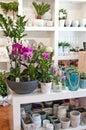 Image : Flower shop interior luxury  illustration