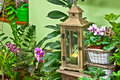 In flower shop old used lantern the Royalty Free Stock Image