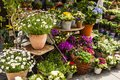 Flower shop on the street with a lot of different flowers Royalty Free Stock Photography