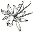 Flower sketch bouquet hand drawing for design Royalty Free Stock Photography