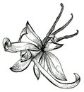 Flower sketch bouquet hand drawing for design Royalty Free Stock Images