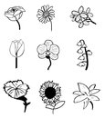 Flower sketches hand drawn ink of common everyday flowers Stock Photos