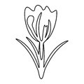 Flower spring natural decoration thin line