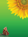 Flower sunflower and butterfly on a green backgrou Stock Images