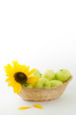 Flower of a sunflower and green apples in the basket Royalty Free Stock Photo