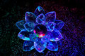 Flower from transparent plastic shined in darkness Royalty Free Stock Photo