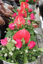 Flower in tray row of for pour water on the hands of revered elders and ask for blessing Stock Images