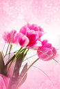 Flower  tulips  and blurs Stock Photo