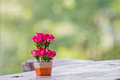 Flower in vase with green bokeh Royalty Free Stock Photo
