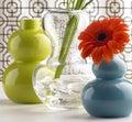 Flower vases gerber daisy in Stock Photo