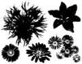 Flower Vectors Black Outlines Royalty Free Stock Photo