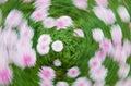 Flower vortex Royalty Free Stock Photo