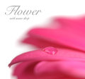 Flower with water drop. Soft focus. Royalty Free Stock Photo