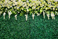 Flower wedding is background weddingday flowers archway of venue photography and resolution of million pixels Royalty Free Stock Photos