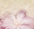 Flower Wedding Retro Background Royalty Free Stock Photo