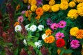 Flower (white, yellow, orange, purple, pink color) Naturally bea Royalty Free Stock Photo