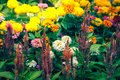 Flower white, yellow, orange, purple, pink color Naturally bea Royalty Free Stock Photo