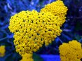 flower, yellow, flowers, garden, nature, plant, green, flora, spring, marigold, summer, blossom, bloom, orange, pink, beauty Royalty Free Stock Photo