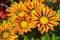 flower, yellow, nature, garden, orange, summer, green, plant, flowers, bloom, flora, sunflower, daisy, macro, design, textured, Royalty Free Stock Photo