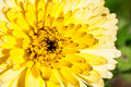 Flower With Yellow Petals, Mac...