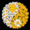 Flower yin-yang Stock Photo