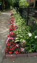 Flowerbed Along Sidewalk Stock Photography