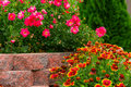Flowerbed close up on with colorful flowers Royalty Free Stock Image