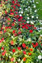 Flowerbed in Bratislava, Slovakia.