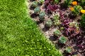 Flowerbed with plants and blossoms. Royalty Free Stock Photo