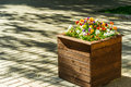 Flowerbed town wooden on sunny pavestone Stock Photo