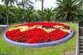 Flowerbed tropical park with and palm trees Stock Image