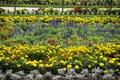 Flowerbeds in the garden