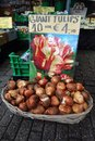 Flowerbulbs for sale in Holland Royalty Free Stock Photo