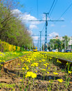 Flowered rails tram rail in budapest covered by yellow flowers Stock Photography
