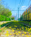 Flowered rails tram rail in budapest covered by yellow flowers Royalty Free Stock Photo