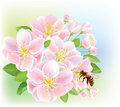 Flowering branch of apple with bee Stock Image
