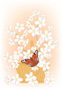 Flowering branches of cherry in a basket and butterfly Royalty Free Stock Image